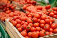 Azərbaycanın daha 10 müəssisəsinə Rusiyaya pomidor ixracına icazə verilib